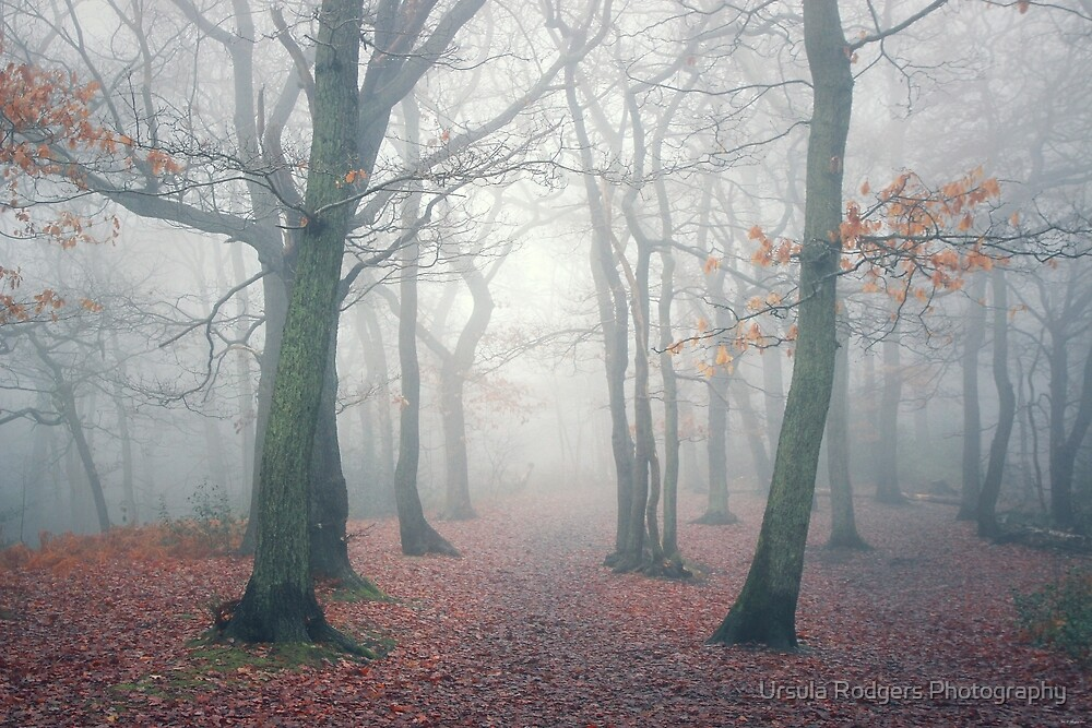 The Hidden by Ursula Rodgers Photography