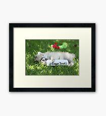 Stewie my puppy pomeranian Framed Print