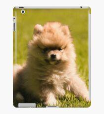 Stewie my puppy pomeranian iPad Case/Skin