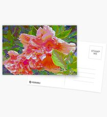 Newly trimmed hibiscus bush Postcards