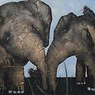 Wacky Birds on Baby Elephants by Tom Norton