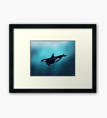 """""""Lost in Serenity"""" ~ orca / killer whale art by Amber Marine Framed Print"""