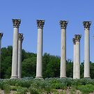 Original U.S. Capitol columns by nealbarnett