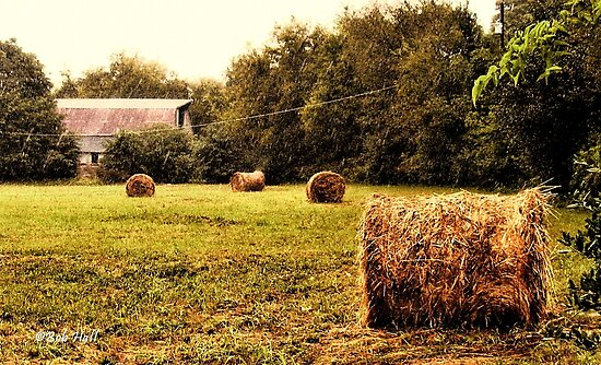 """""""Bales Along the Tree line""""... prints and products by Bob Hall©"""