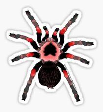 Red Knee Tarantula Sticker