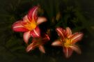 Day Lilies by Elaine Teague