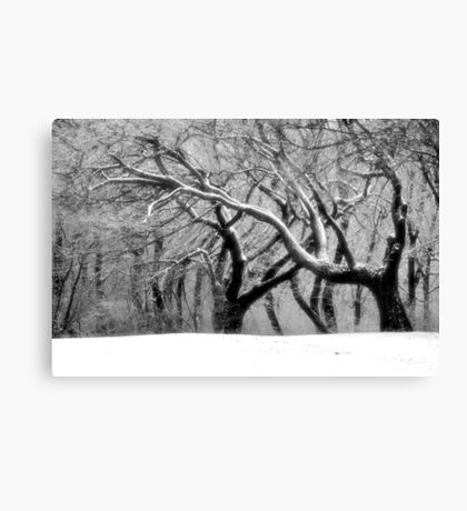 The Dance of Nature Canvas Print
