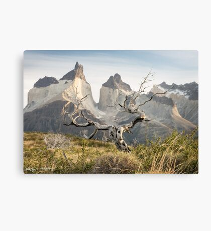 After the Fires Canvas Print