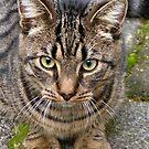Cat visit back yard. by patjila