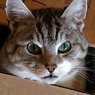 Cat in box: I see you! by patjila