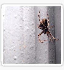 Itsy Bitsy Spider Sticker