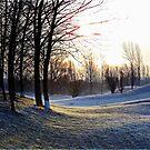 Winter beauty by Angele Ann  Andrews