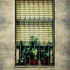 City Cell by RC deWinter