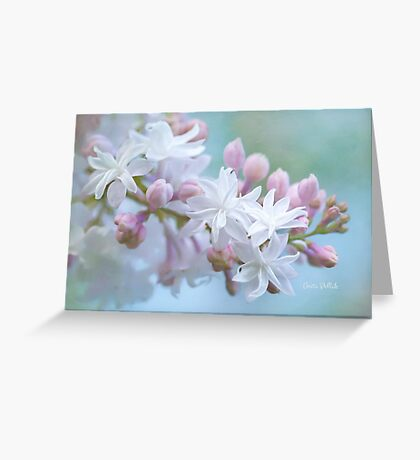 Soft and Lovely Lilac Blossoms Greeting Card