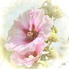 ~ A Flower Has a Gentle Soul ~ by Brenda Boisvert