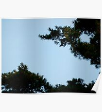 Pine Trees & Blue Skies - Nature Poster