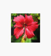 Hibiscus in Red #1 Art Board