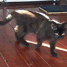 Kitten by Maryanne Lawrence