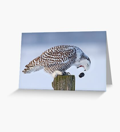 Cough it up buddy - Snowy Owl Greeting Card
