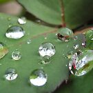 rain drops by Maryanne Lawrence