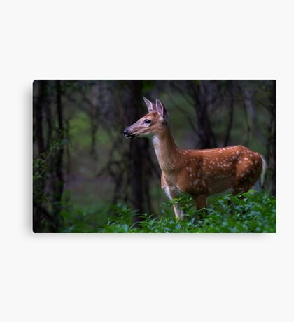 Portrait of a Fawn - White Tailed Deer Canvas Print