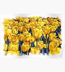 Yellow Tulips - watercolour Poster