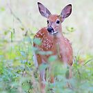 White Tailed Deer Fawn by Jim Cumming