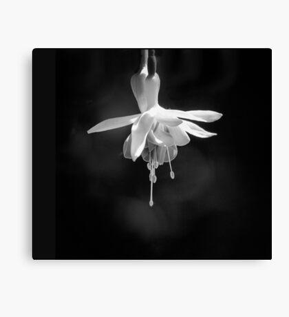Fuchsia in Black and White Canvas Print