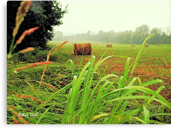 """Tall Grass and Hay Bales""... prints and products by © Bob Hall"