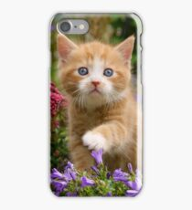 Cute Ginger Cat Kitten in a Garden Photo Portrait iPhone Case/Skin