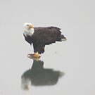 Eagle on Lake by klziegler