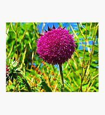 The Purple Sun Photographic Print