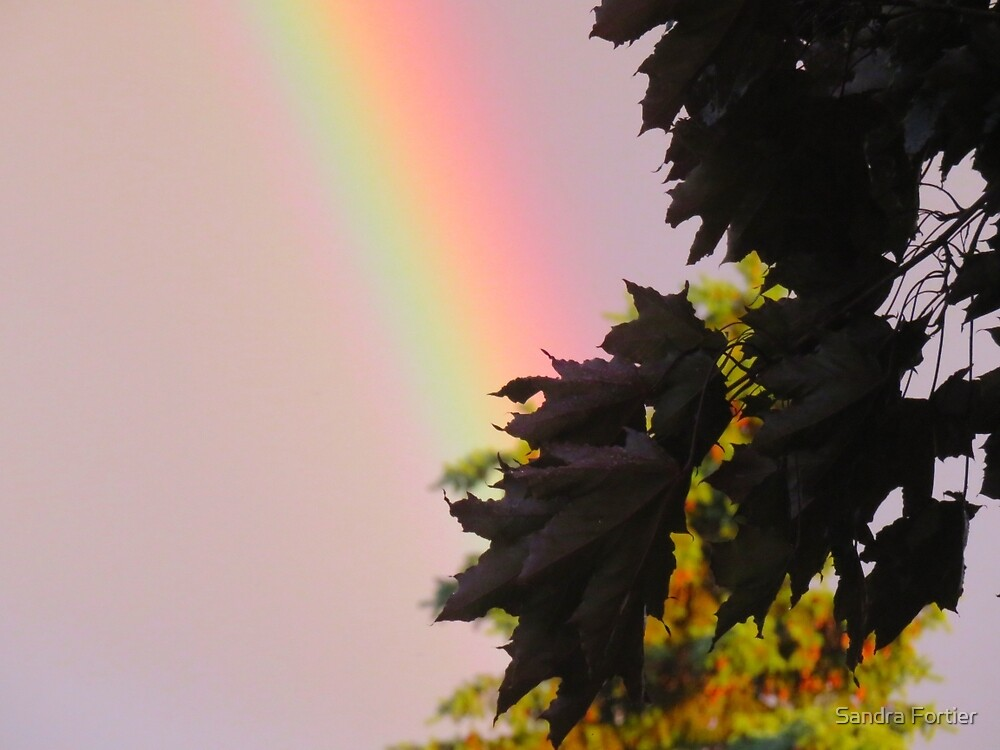 Wish Upon a Rainbow by Sandra Fortier