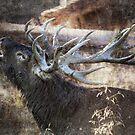 Autumn roar by Alan Mattison