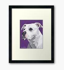 Pit bull Art by Lee H Keller Framed Print