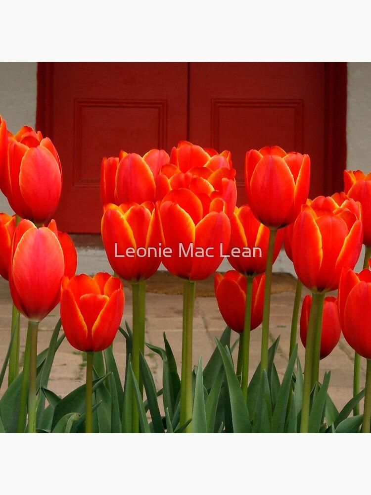 Tulips at My Door by yallmia