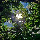 sunburst through the leaves... by Wieslaw Jan Syposz