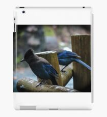 Stellar Jays on a drizzly afternoon iPad Case/Skin