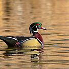 Wood Duck Drake  by Nancy Barrett