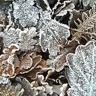 Frosted leaves by KMorral
