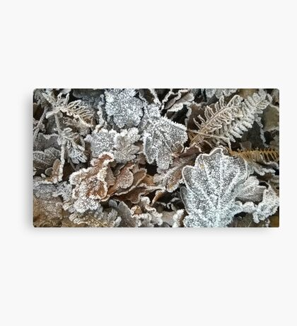 Frosted leaves Canvas Print