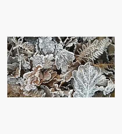Frosted leaves Photographic Print