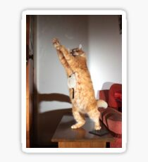 Dancing cat Sticker