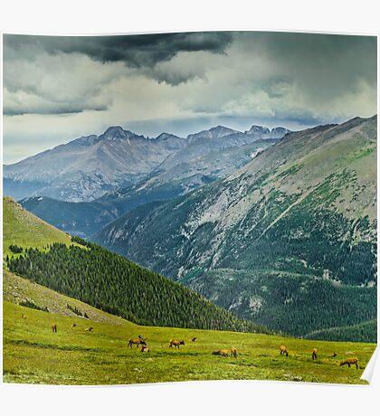 Elk And Longs Peak Poster