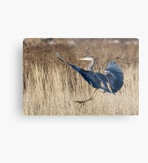 Great Blue Heron Landing Metal Print