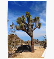 Joshua Tree National Monument Poster