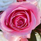 Rosa Rose und Band von BlueMoonRose