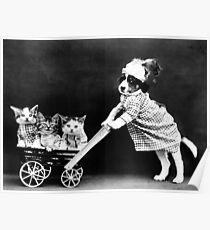 Puppy Taking Kittens for a Walk Poster