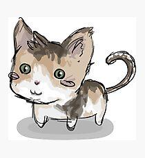 Cat squeegie Photographic Print