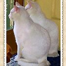 White Cats Extraordinaire by hickerson